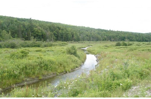 Vermont Agency Of Natural Resources Wetlands