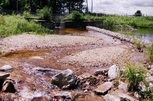 Veteran's Reservoir Amphibian Habitat